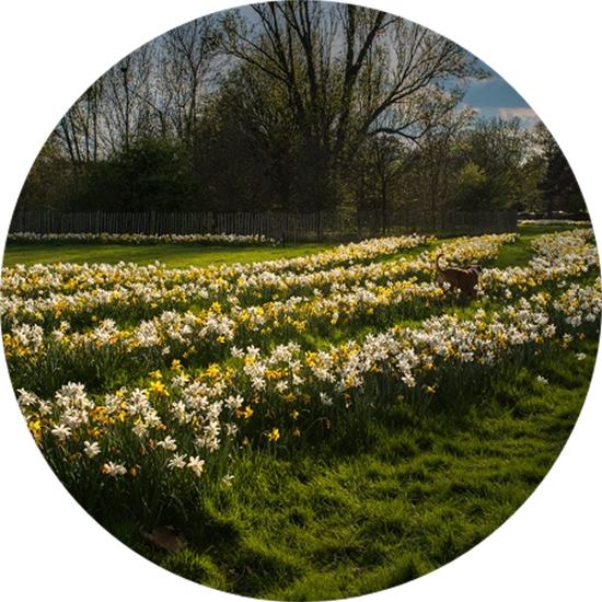 A park with flowers